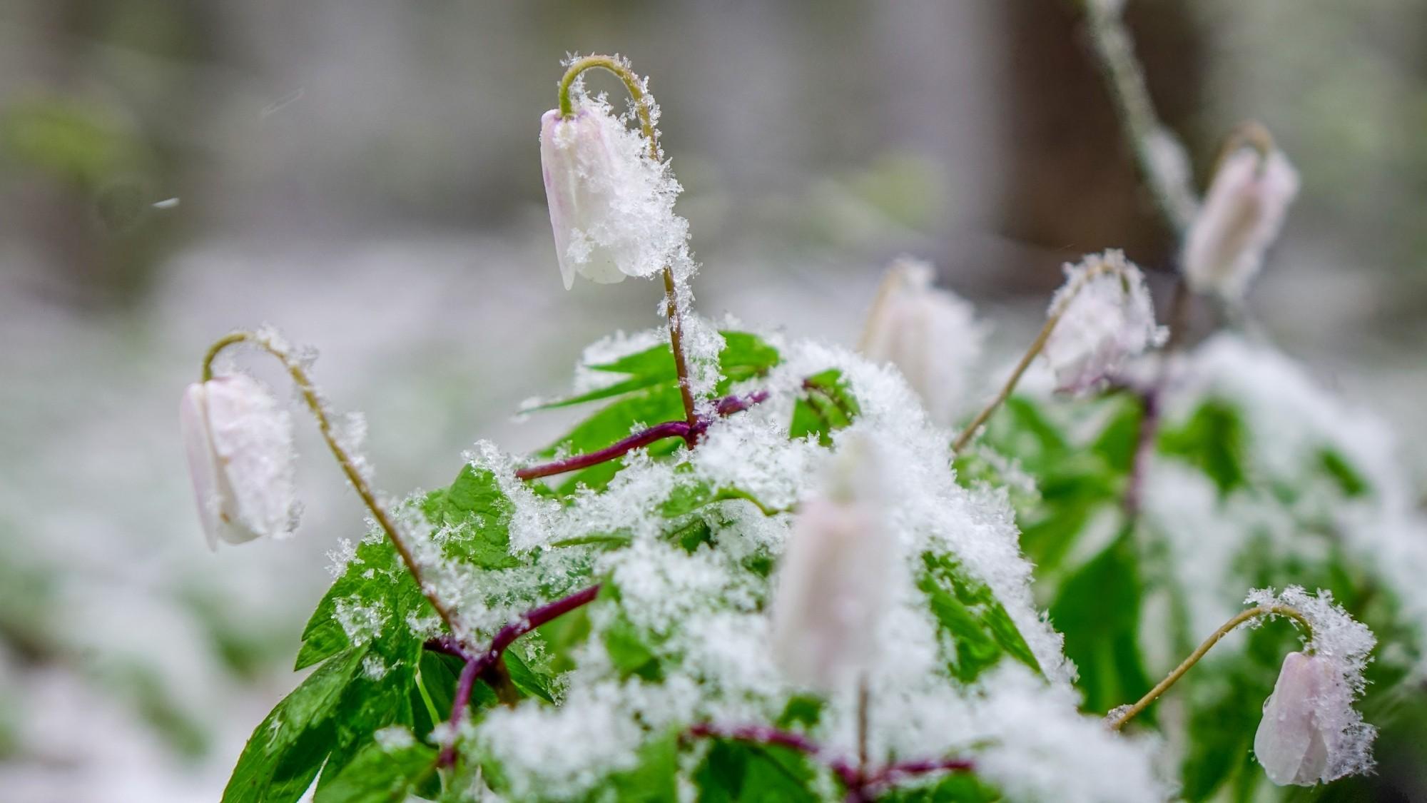 Zima w maju - zdjęcie 1