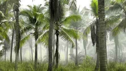Lasy tropikalne pochłaniają coraz mniej CO2, a już niedługo same będą jego źródłem