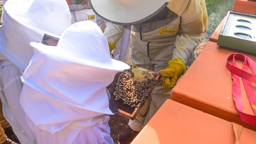Czesław Mozil zmienia świat z pszczołami. Morawiecki o pszczelarskich tradycjach