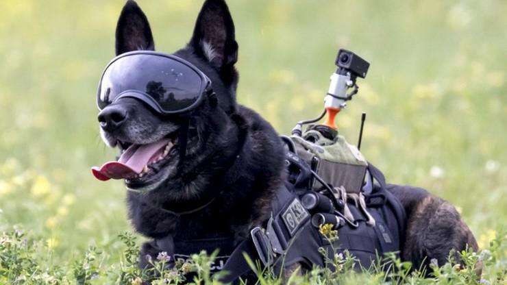 """Tego psa boją się wszyscy przestępcy. """"Zawsze pierwszy wkracza do akcji"""""""