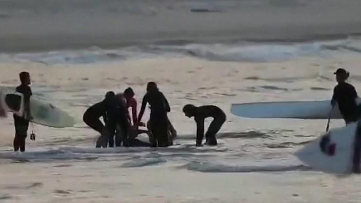 Atak rekina w Australii. Nie żyje 46-letni surfer