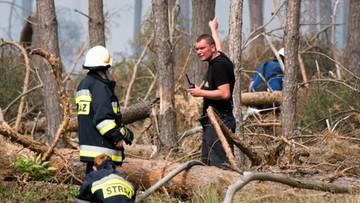 Ktoś podpala lasy zniszczone przez huragan stulecia. Jest nagroda za wskazanie piromana