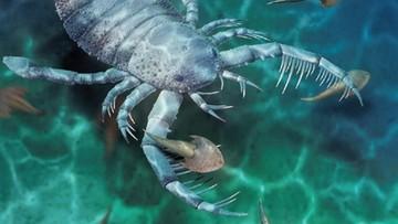 Odkryto skamielinę skorpiona morskiego. Jest wielkości psa