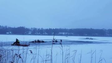 Stado jeleni wpadło do jeziora. Większości z nich nie udało się uratować