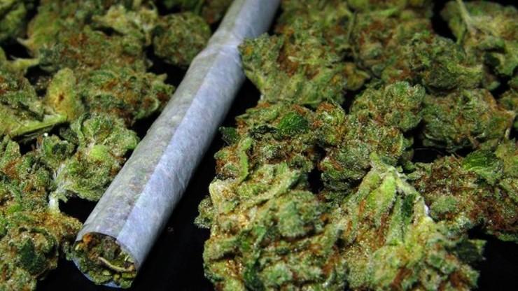 Zgłosił się na policję i poinformował, że ma marihuanę. Grożą mu 3 lata więzienia