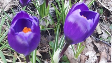 Za oknem już wiosna. Zdjęcia od czytelników