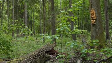 """""""Chronione tylko na papierze"""". WWF o większości obszarów przyrodniczych w UE"""