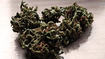"""""""Rekreacja"""" w Kalifornii po nowemu: skręt z marihuaną. Legalnie"""