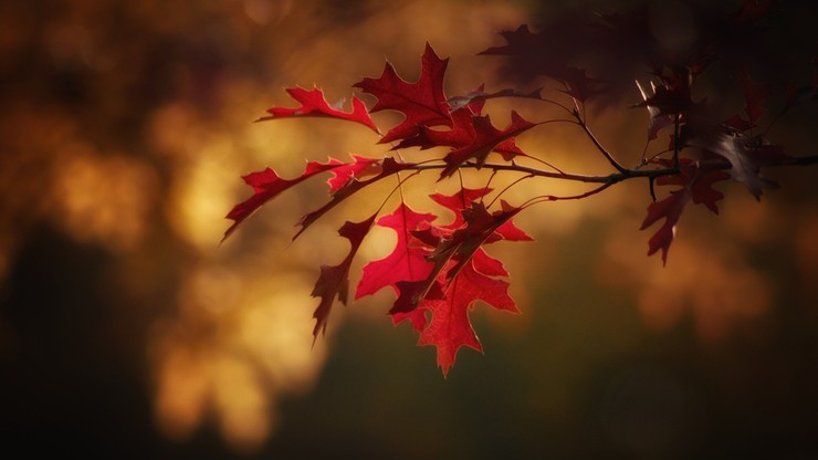Pierwszy dzień astronomicznej jesieni. Lato skończy się dokładnie o 21:21
