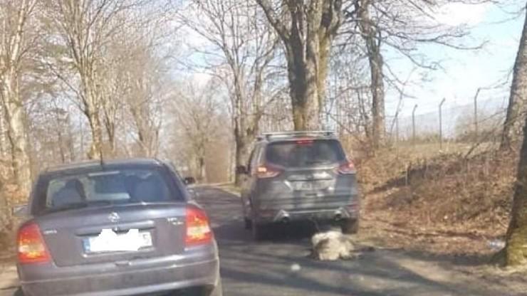 Ciągnął psa za samochodem, zwierzę zmarło. Były senator PiS nie trafi do aresztu