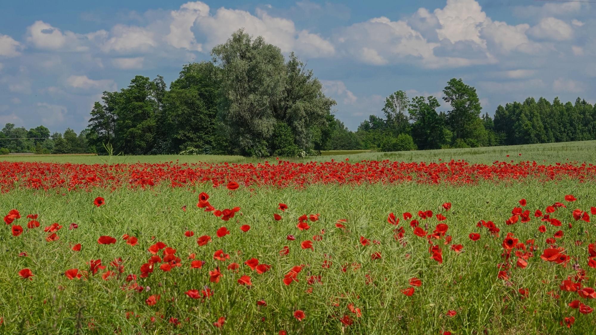Kochamy Polskę - zdjęcie 2