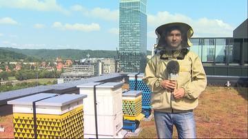Hodują pszczoły w mieście. Na dachu gdańskiego biurowca jest ich ponad 200 tys.