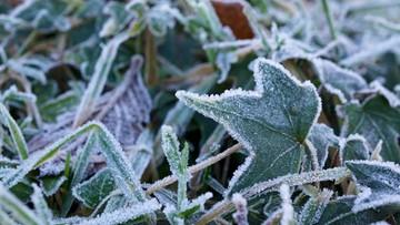 Pierwsze przymrozki już za tydzień. Synoptycy wieszczą wyjątkowo długą i ostrą zimę