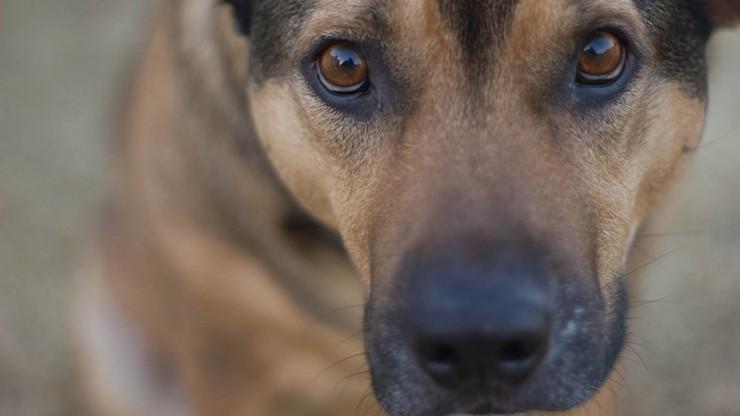 W warszawskich urzędach dzielnic trwa zbiórka dla bezdomnych zwierząt