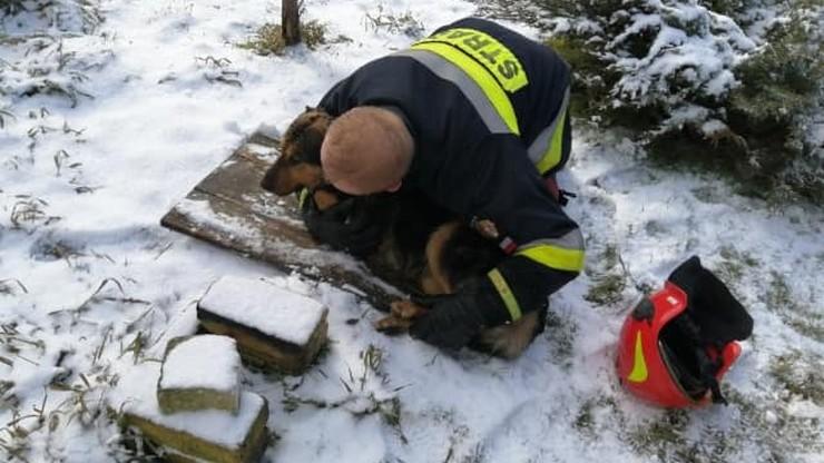 Strażacy uratowali psa z lodowatej wody. Zwierze było wycieńczone