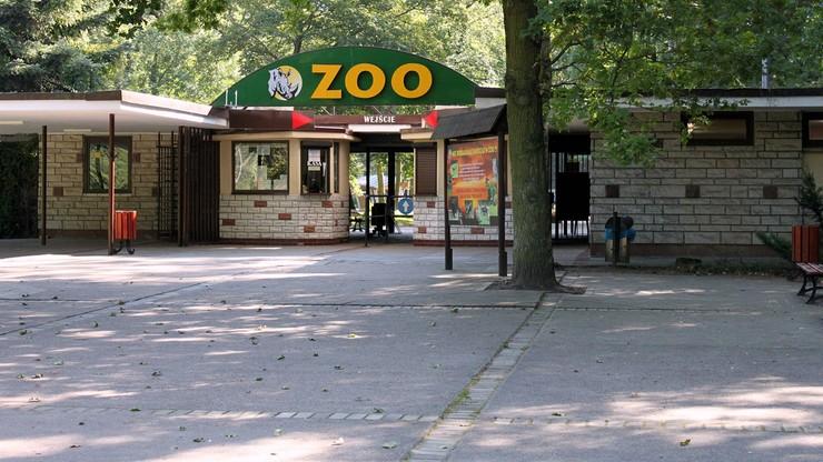 Poznańskie zoo: nasi pracownicy są nękani i pomawiani