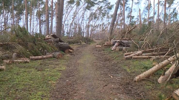 Drewno z lasów zniszczonych podczas nawałnic płynie do Skandynawii