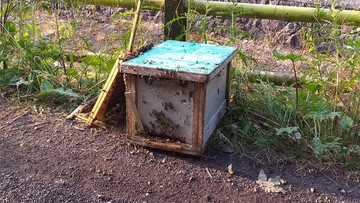 Ukradł lawetę z ulami. 1,5 mln pszczół wypadło na drogę, część zginęła