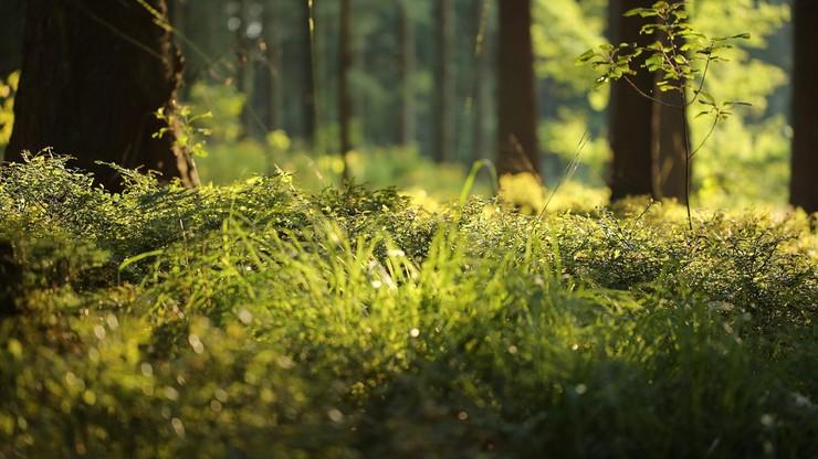 Unia Europejska chce zasadzić 3 miliardy drzew