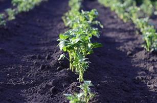 Niemiecki rząd przeznaczy miliard euro na bardziej ekologiczne rolnictwo