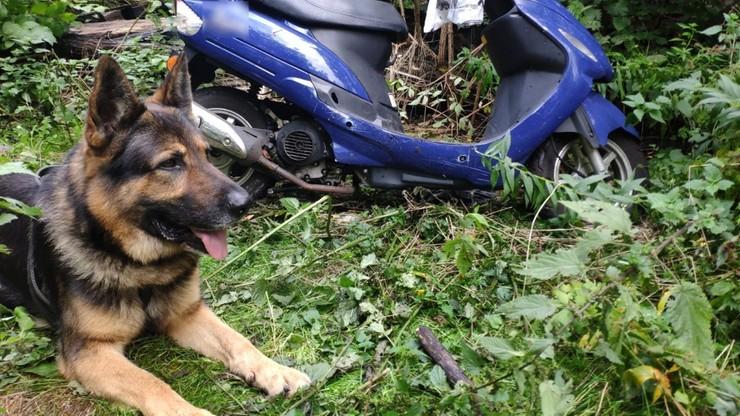 Śląskie. Policyjny pies najpierw znalazł skradzione motocykle, teraz odszukał zaginiony skuter