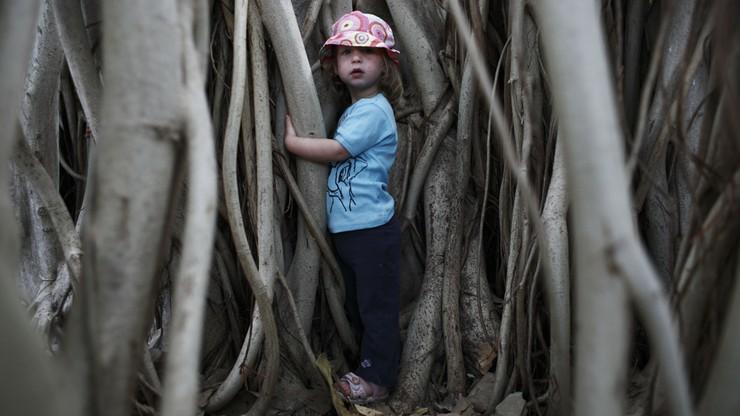 Naukowcy: pozwólcie chodzić dzieciom po drzewach, to dobre dla rozwoju ich mózgu