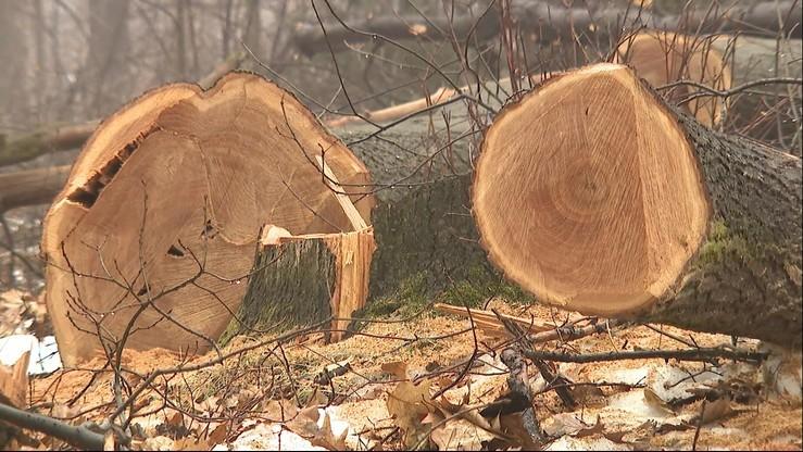 Będą nowe zasady wycinki. Po debacie w Sejmie nad projektami dotyczącym drzew