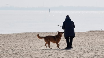 """Psy i koty nie przenoszą koronawirusa. """"Potwierdzają to badania tysięcy próbek"""""""