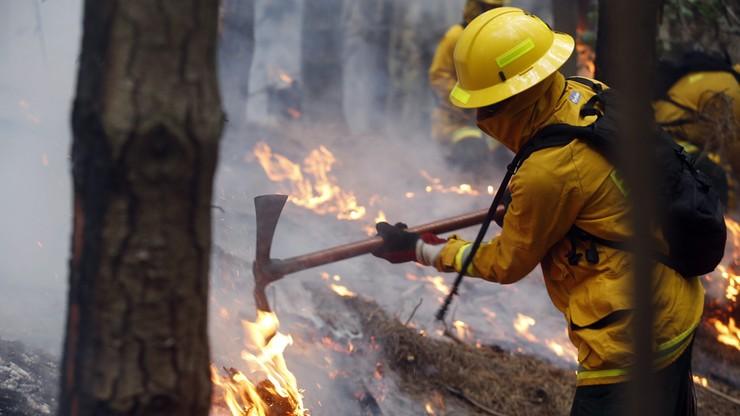 Ogromne pożary lasów w Chile. Trwa śledztwo