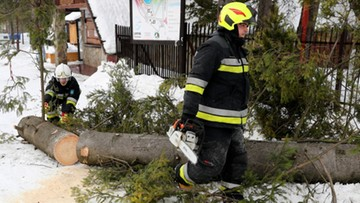Drzewo powalone przez wiatr spadło na samochód. Ucierpiała pięcioosobowa rodzina