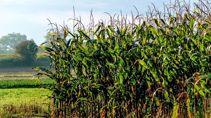 Miał zostawić 4-letniego synka w polu kukurydzy. Rodzina wydała oświadczenie