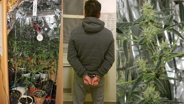 Nie chciał wpuścić matki do pokoju, to zadzwoniła po policjantów. Bo w szafie rosła marihuana