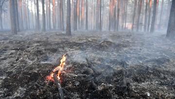 Wzrasta zagrożenie pożarowe w lasach. Tylko w czwartek wybuchło ich ponad sto