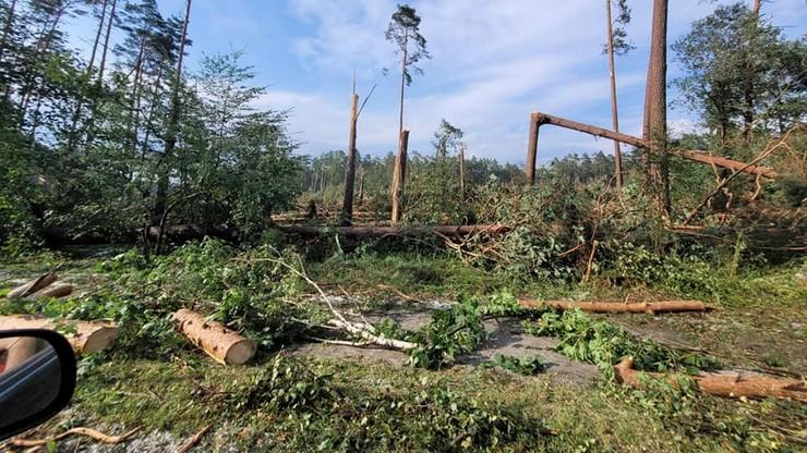 Kujawsko-pomorskie. Setki powalonych drzew w Borach Tucholskich. Leśnicy szacują straty
