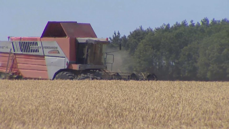 Nawet 1 tys. zł na hektar dla poszkodowanych rolników. Rząd obiecuje rekompensaty