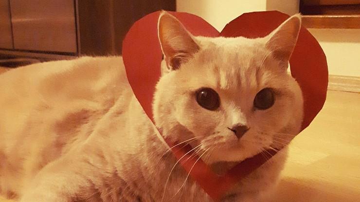 """Kot o imieniu """"Ferrero"""" - wersja """"walentynkowa"""""""