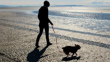 Włoscy obrońcy praw zwierząt walczą o wstęp psów na plaże