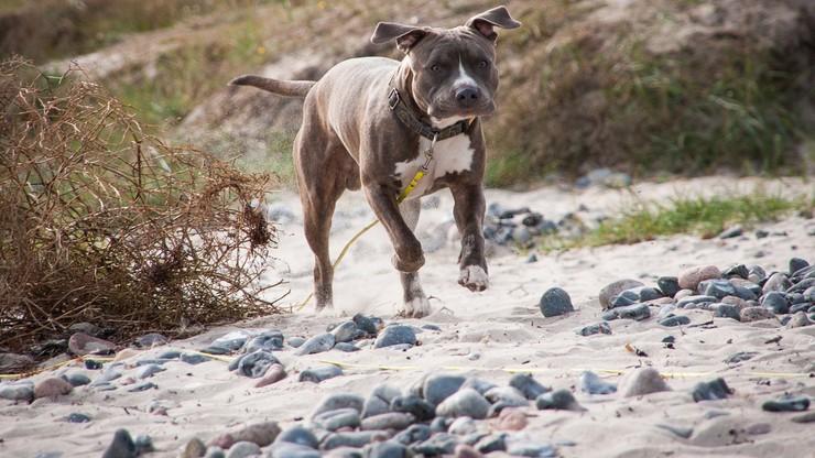 """Chciał odzyskać """"swojego"""" psa. Grozi mu do 10 lat więzienia"""