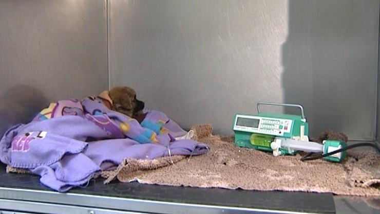 Resort finansów planuje wyższy VAT na leki dla zwierząt