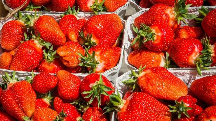 Polacy ratują francuskich plantatorów truskawek. Bez naszych rodaków splajtowaliby