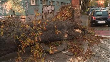 Tragiczny bilans wichur w Polsce. Alerty i ostrzeżenia przed silnym wiatrem
