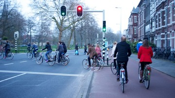 Żółw, zając i krowa podpowiadają rowerzystom. Holandia testuje nowy system