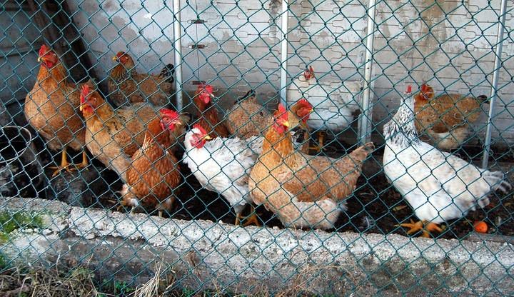 Wirus ptasiej grypy w Zachodniopomorskiem. Resort rolnictwa zaleca ostrożność