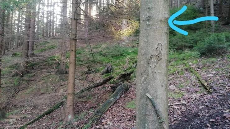 Stalowe linki między drzewami w lesie. Śmiertelna pułapka