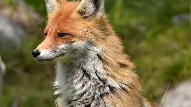 Otwarte Klatki o projekcie PiS w sprawie zwierząt: liczymy, że politycy wywiążą się z obietnic