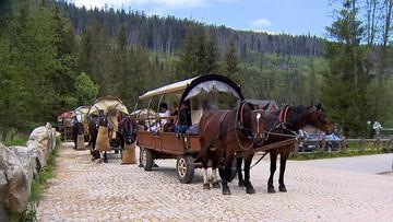 Nowe zasady badania koni wożących turystów do Morskiego Oka