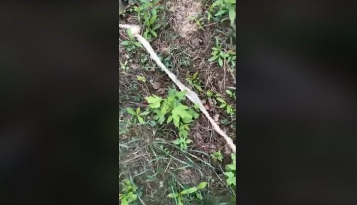 Wylinka węża znaleziona nad Wisłą. Nie wiadomo jeszcze, do jakiego gatunku należy