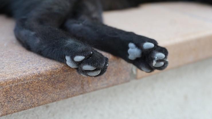 Otruł już 200 kotów. We Francji grasuje seryjny morderca zwierząt
