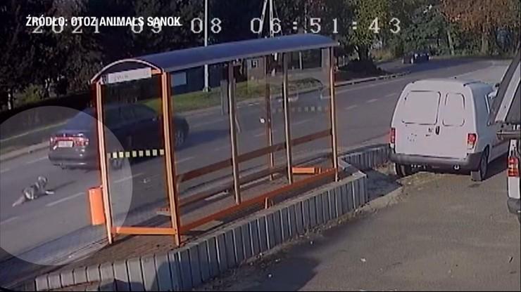 Nagranie z monitoringu, na którym widać, jak kobieta ciągnie psa za autem