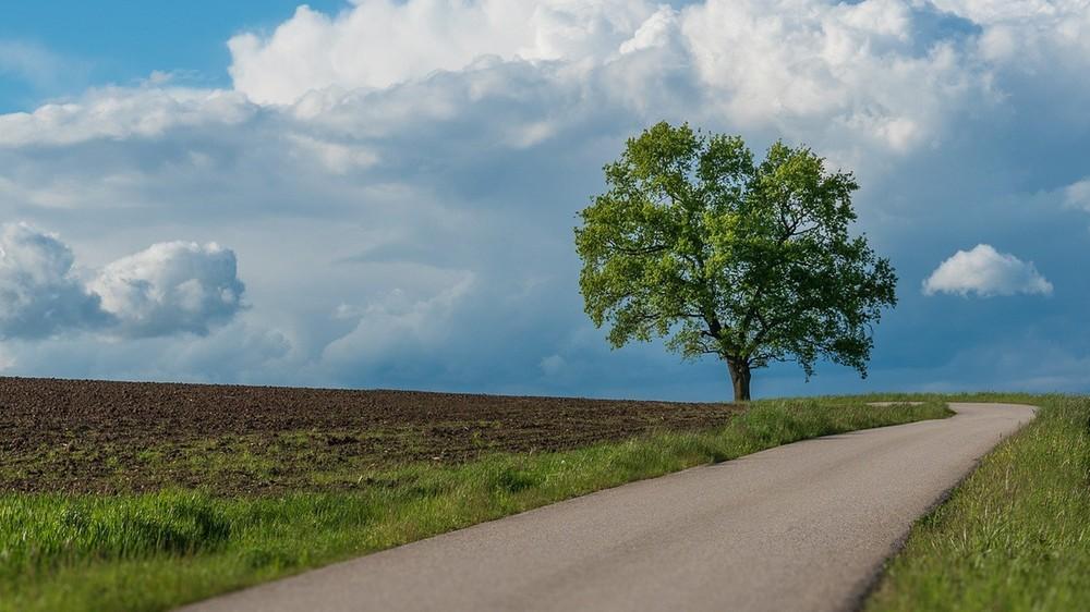 Nawet pojedyncze drzewa znacznie schładzają miasta podczas upałów